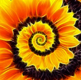 Sunflower infinity spiral abstract background. Royalty Free Stock Photography