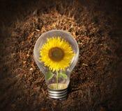 Sunflower inside Bulb Royalty Free Stock Photography