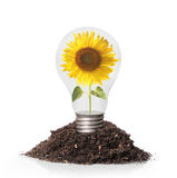 Sunflower inside Bulb Royalty Free Stock Images