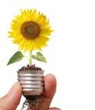 Sunflower inside Bulb Royalty Free Stock Photo
