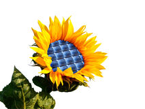 Sunflower. With integration of a photovoltaic panel Royalty Free Stock Photos