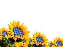 Sunflower. With integration of a photovoltaic panel Royalty Free Stock Photography