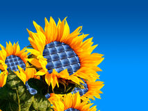 Sunflower. With integration of a photovoltaic panel Stock Photography