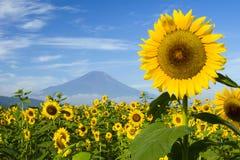 Sunflower IV Stock Photos