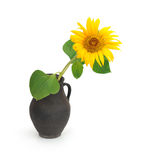 Sunflower in a jug Stock Photos