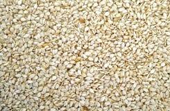 Sunflower Kernels Stock Image