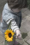 Sunflower Kid. Little Kid holding a yellow Sunflower, rest desaturated stock photo
