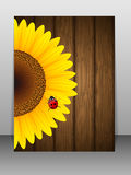 Sunflower and ladybird on wooden background. Royalty Free Stock Photo