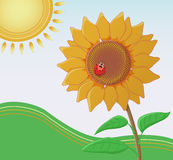 Sunflower with a ladybug facing the sun. Vector illustration of a sunflower facing the sun. A ladybug is sitting on its flowering head Royalty Free Stock Image