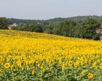 Sunflower Landscape Royalty Free Stock Images