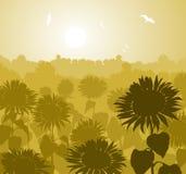 Sunflower landscape Stock Photography