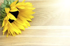 Sunflower laying on a wooden table Stock Image