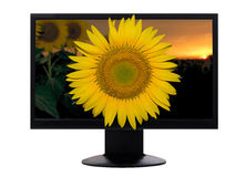 Tv screen with sunflower in 3D stock images