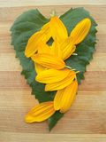 Sunflower leaf and petals Stock Photography