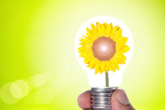 Sunflower in a light bulb. Sunflower representing a green and clean source of energy Royalty Free Stock Image