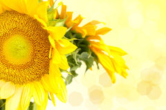 Sunflower with lights Stock Image