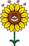 Sunflower in Love Royalty Free Stock Image