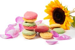 Sunflower and macaron cookies Royalty Free Stock Image
