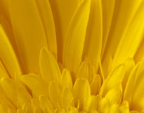 Sunflower Macro Detail Royalty Free Stock Images
