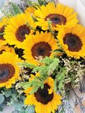 Sunflower make me smile like sunshine stock photography