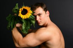 Sunflower man Royalty Free Stock Photography