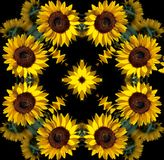 Sunflower mandala. Shining sunflower mandala on the black background Royalty Free Stock Image
