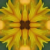 Sunflower mandala, symetric abstract background Stock Images