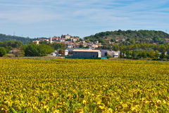 Sunflower. Medieval French Town Surrounded of the Sunflower Fields Stock Image