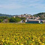 Sunflower. Medieval French Town Surrounded of the Sunflower Fields Stock Photography