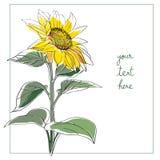 Sunflower minimal card Stock Photos