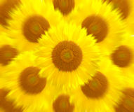 Sunflower more motion zoom blur background Royalty Free Stock Images