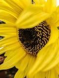 Sunflower nature photography stock photos