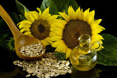 Sunflower with oil Stock Images