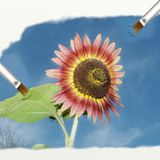 Sunflower oil effect. Illustration with sunflower oil effect stock images