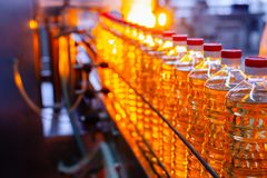 Sunflower oil. Factory line of production and filling of refined oil from sunflower seeds. Factory conveyor of food industry.  Stock Photography