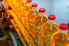 Sunflower oil. Factory line of production and filling of refined oil from sunflower seeds. Factory conveyor of food industry.  Royalty Free Stock Photo
