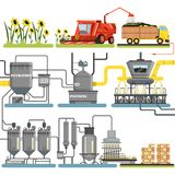 Sunflower oil production process stages, harvesting sunflowers and packing of finished products vector Illustrations. Isolated on a white background royalty free illustration