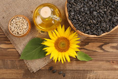 Sunflower oil, seed and sunflower Stock Image
