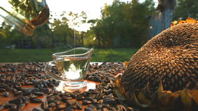 Sunflower oil and sunflower seeds on nature. Slow motion. stock video footage