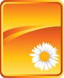 Sunflower on orange background. Sunflower on wavy orange backdrop Royalty Free Stock Images