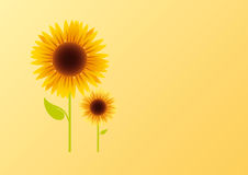 Sunflower on an orange background. Summer vector illustration. Background with flower Royalty Free Stock Photo