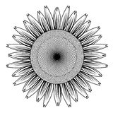 Sunflower out line vector Royalty Free Stock Image