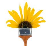 Sunflower paintbrush Royalty Free Stock Image