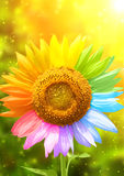 Sunflower painted in different colors Royalty Free Stock Images