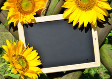 Sunflower panel shield Stock Images