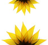 Sunflower part. Vector Royalty Free Stock Image