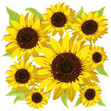 Sunflower pattern Royalty Free Stock Photography