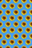 Sunflower pattern Stock Photos