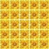 Sunflower pattern Royalty Free Stock Images