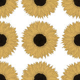 Sunflower pattern design Royalty Free Stock Images